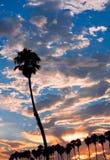 Enige Palm bij Zonsondergang Royalty-vrije Stock Foto's