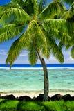 Enige palm die blauwe lagune overziet Stock Foto's