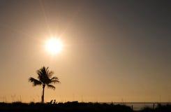 Enige palm en zonsopgang Royalty-vrije Stock Fotografie