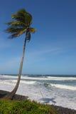Enige palm op strand Stock Fotografie