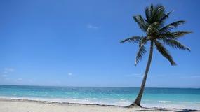 Enige Palm op tropisch Caraïbisch strand in Dominicaanse Republiek stock afbeeldingen
