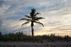 Enige Palm tegen een Zonsondergang van Florida stock afbeelding
