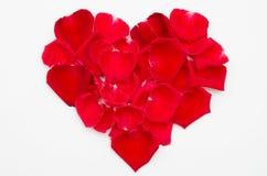 Enige rood nam hartvorm op witte achtergrond toe Stock Foto's