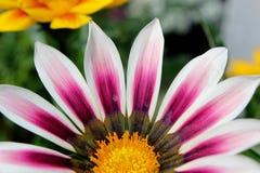 Enige roze bloem op lange gezonde die steel in groen van struiken in gemodelleerde tuin wordt geplooid royalty-vrije stock fotografie