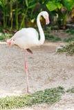 Enige roze flamingovogel royalty-vrije stock fotografie