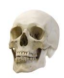 Enige schedel die op wit wordt geïsoleerde Stock Foto's