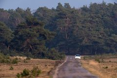 Enige steegweg met witte auto op de kant van de weg in natuurreservaat Royalty-vrije Stock Fotografie