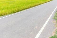Enige steegweg rechtstreeks door padieveld in gebiedslandbouwbedrijf Royalty-vrije Stock Foto's