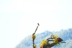 Enige vogel op een tak met bromelia's op een boom Royalty-vrije Stock Foto's