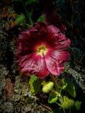 Enige wilde bloem tegen diepe geweven boomschors Royalty-vrije Stock Foto's