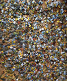 Enigma dispersado em um assoalho marrom Fotografia de Stock Royalty Free