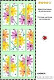 Enigma visual - combine as metades - margaridas do gerber Imagens de Stock Royalty Free