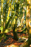 Enigmatic forest Stock Photography