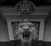 Enigmatyczny lwa huczenie obraz royalty free