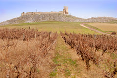 Enisala Fortress And Vineyards Stock Photography