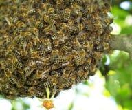 Enjambre de abejas detalladamente Fotos de archivo libres de regalías