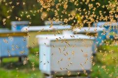 Enjambre de abejas en colmenar Imagenes de archivo