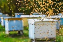 Enjambre de abejas en colmenar Imágenes de archivo libres de regalías