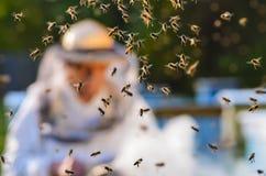 Enjambre de abejas en colmenar Fotografía de archivo libre de regalías