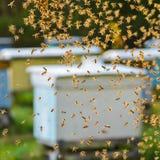 Enjambre de abejas en colmenar Fotos de archivo libres de regalías