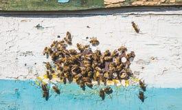Enjambre de abejas en el trabajo Una colmena de las abejas de la miel Foto de archivo libre de regalías