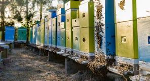 Enjambre de abejas en la entrada de la colmena Imagen de archivo libre de regalías