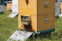 Enjambre de abejas en la entrada de la colmena Imágenes de archivo libres de regalías