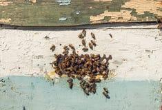 Enjambre de abejas Producción de la miel Fotografía de archivo