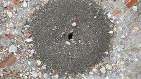 Enjambre de hormigas en cierre de la arena para arriba almacen de metraje de vídeo