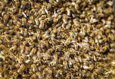 Enjambre de la abeja Imagen de archivo