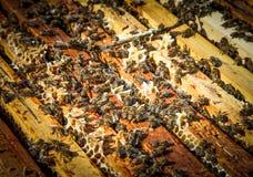 Enjambre de la abeja Imágenes de archivo libres de regalías