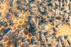 Enjambre de la abeja Fotos de archivo