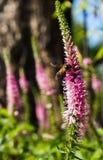 Enjambre de la abeja de la flor Imagen de archivo libre de regalías