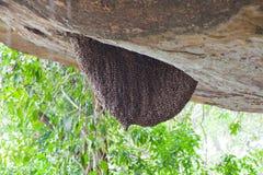 Enjambre de la abeja de la miel Fotografía de archivo