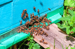 Enjambre de la abeja para salir la colmena Imágenes de archivo libres de regalías