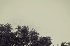 Enjambre de la abeja que vuela sobre un árbol Imagen de archivo libre de regalías