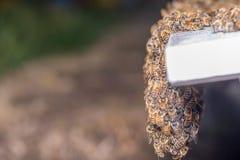Enjambre de la ejecución de abejas Fotos de archivo libres de regalías