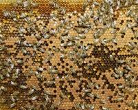 Enjambre de la miel del producto de las abejas Fotografía de archivo libre de regalías