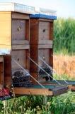 Enjambre de las abejas Imagenes de archivo
