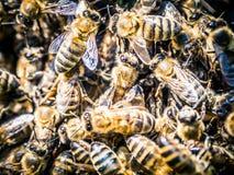 Enjambre de las abejas en el verano Foto de archivo