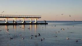 Enjambre de los pájaros que vuelan sobre el mar Cámara lenta metrajes