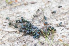 Enjambre de moscas verdes fotos de archivo libres de regalías