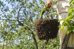 Enjambre del apicultor y de la abeja Fotografía de archivo libre de regalías