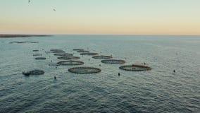 Enjaule el cultivo de pescados en los mares abiertos almacen de video