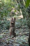 Enjeux en bois dans la forêt photos libres de droits
