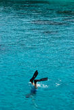 Enjoin the snorkeling Stock Images