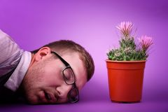 Enjoing erstaunlicher Kaktus des hübschen Mannes Minimales kreatives stillife Natürliches Konzept Stockfotos