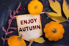 Enjoy autumn royalty free stock photo