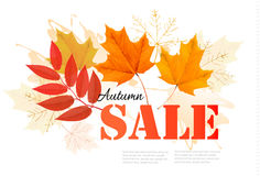 Enjoy Autumn Sales banner with autumn leaves. Stock Image