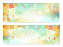 Enjoy autumn sales banners with colorful leaves. Stock Images